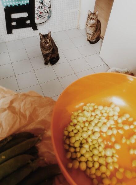 豆がほしい猫