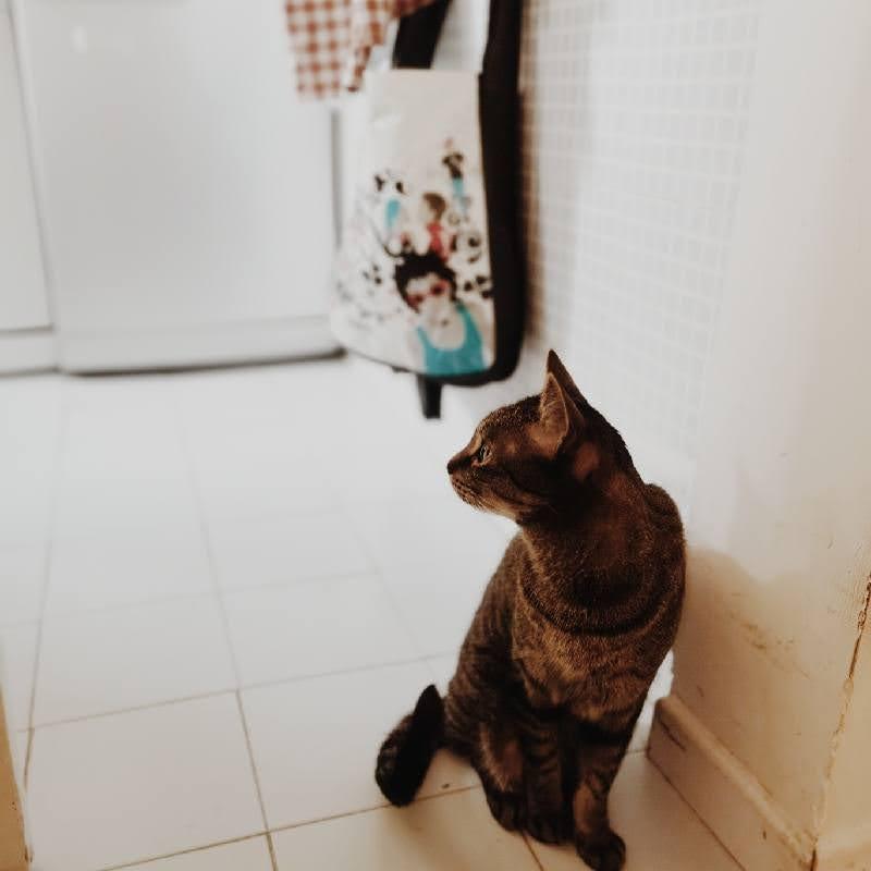 Miffy Momiji Today キッチンでおねだりするミッフィー