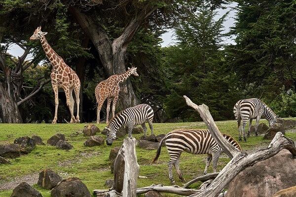 おうち時間-おうちで動物園
