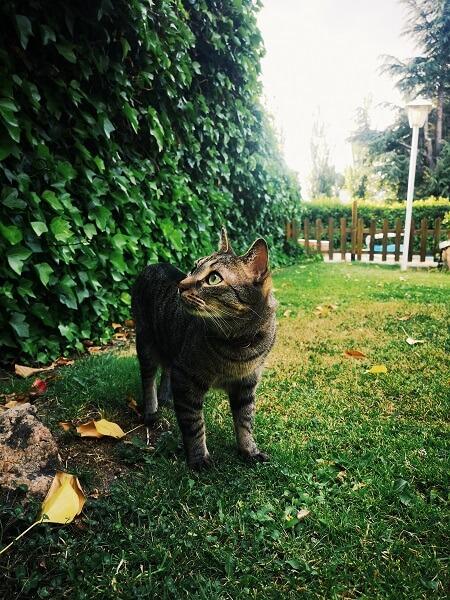 カリカリマシーンSPで猫の健康維持