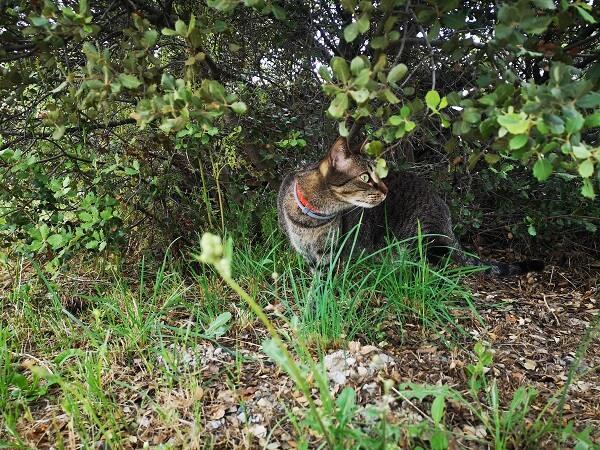 自然を楽しむ猫、ミッフィー