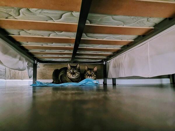 旅行で怖がる猫、もみじ